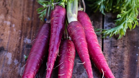 Purple Carrot wallpapers high quality