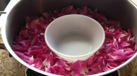 Rose Petals In Water Photo Free#1