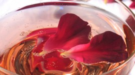 Rose Petals In Water Wallpaper For Mobile