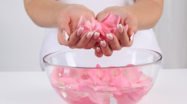 Rose Petals In Water Wallpaper For PC