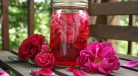 Rose Petals In Water Wallpaper Free