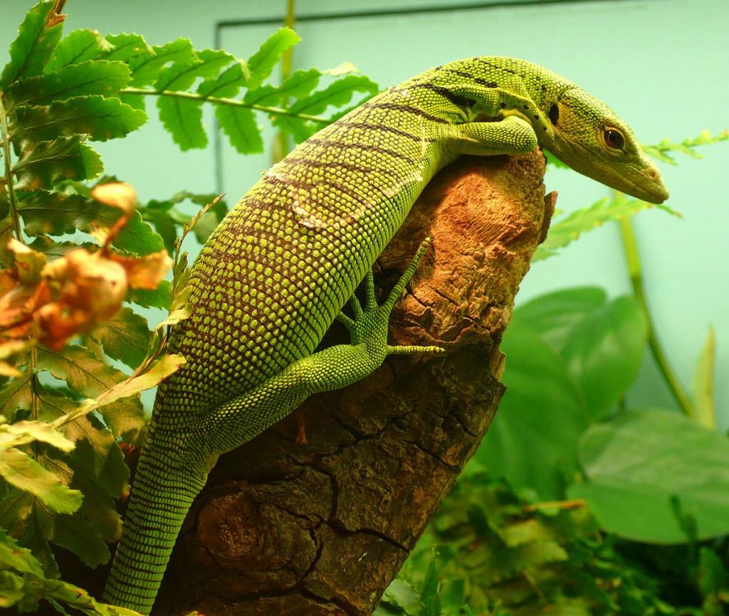 The Emerald Lizard wallpapers HD