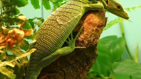 The Emerald Lizard wallpapers high quality