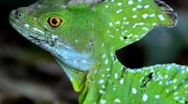 The Emerald Lizard Desktop Wallpaper