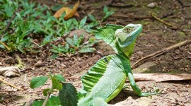 The Emerald Lizard Photo Download