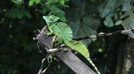 The Emerald Lizard Photo Free#1