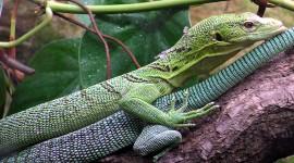 The Emerald Lizard Wallpaper Full HD