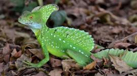 The Emerald Lizard Wallpaper Gallery