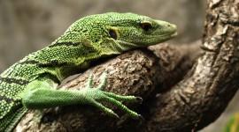 The Emerald Lizard Wallpaper HQ