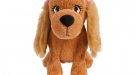 Toy Puppy Photo
