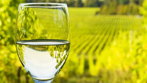 White Wines wallpapers high quality