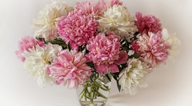 4K Bouquet Of Peonies Best Wallpaper