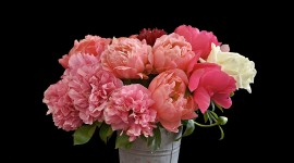 4K Bouquet Of Peonies Wallpaper For Desktop