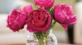 4K Bouquet Of Peonies Wallpaper For IPhone