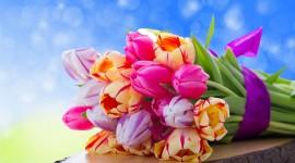 4K Bouquet Tulips Best Wallpaper