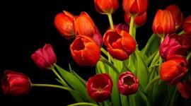 4K Bouquet Tulips Desktop Wallpaper For PC