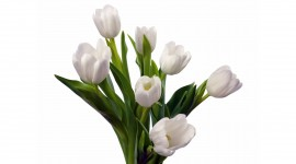 4K Bouquet Tulips Photo Download