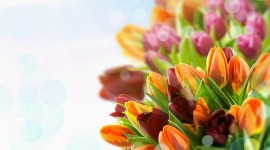 4K Bouquet Tulips Photo Free
