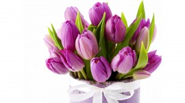 4K Bouquet Tulips Wallpaper Download
