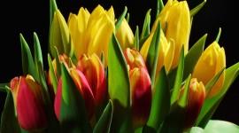 4K Bouquet Tulips Wallpaper For Desktop