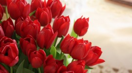 4K Bouquet Tulips Wallpaper For PC