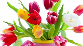 4K Bouquet Tulips Wallpaper Full HD