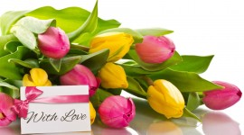 4K Bouquet Tulips Wallpaper Gallery