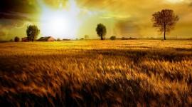 4K Grain Field Photo