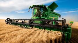 4K Grain Field Photo Free