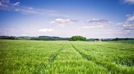 4K Grain Field Wallpaper 1080p