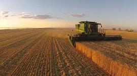 4K Grain Field Wallpaper For PC