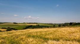 4K Grain Field Wallpaper Gallery