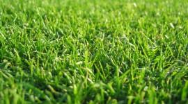 4K Green Grass Desktop Wallpaper