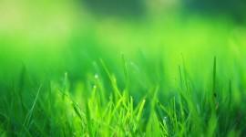 4K Green Grass Desktop Wallpaper For PC