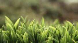 4K Green Grass Desktop Wallpaper HD