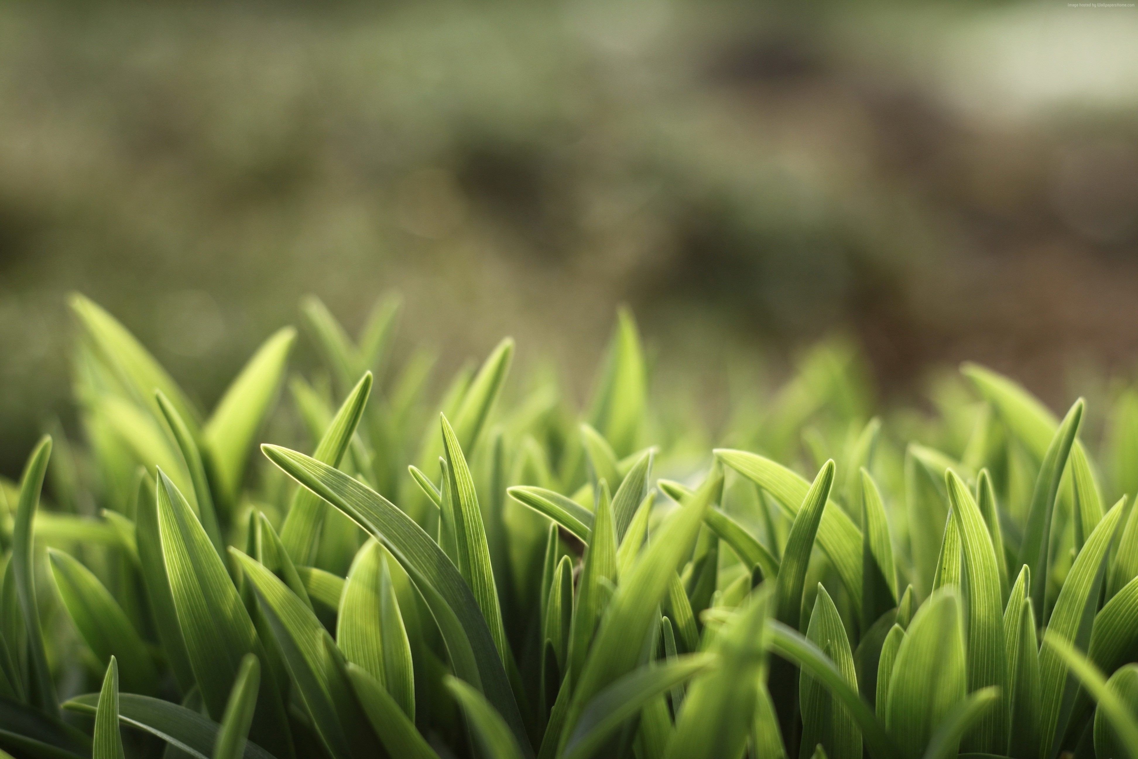 4K Green Grass Wallpapers High Quality | Download Free