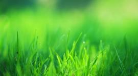 4K Green Grass Desktop Wallpaper#1