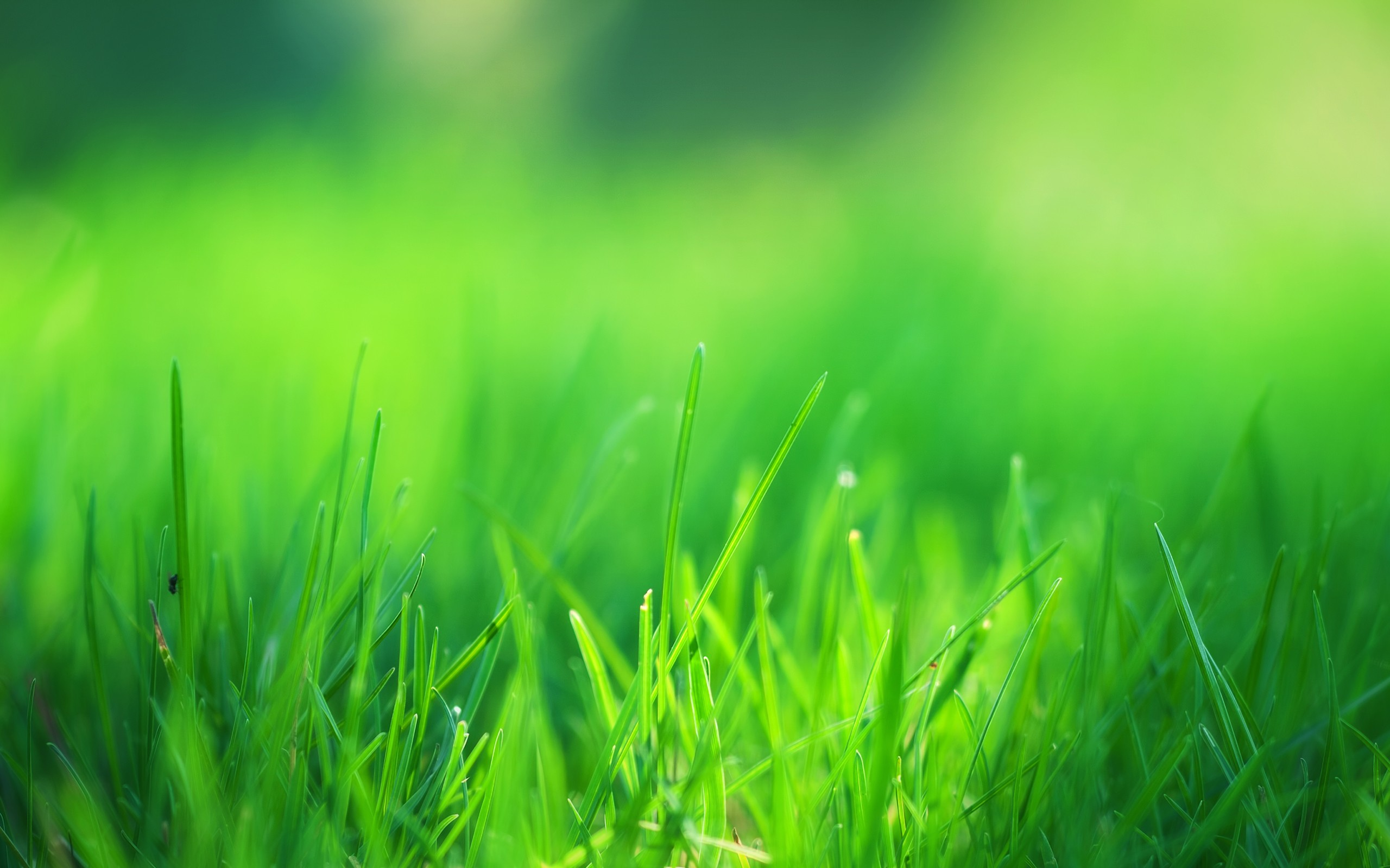 4K Green Grass Wallpapers High Quality