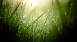 4K Green Grass Photo