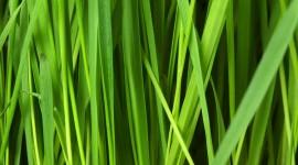 4K Green Grass Wallpaper Background