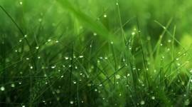 4K Green Grass Wallpaper Download