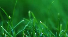 4K Green Grass Wallpaper For IPhone