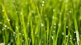 4K Green Grass Wallpaper For Mobile