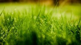 4K Green Grass Wallpaper Full HD