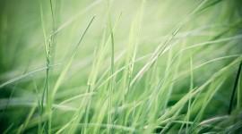 4K Green Grass Wallpaper Full HD#1