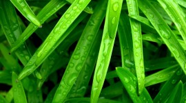 4K Green Grass Wallpaper Full HD#2