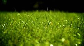 4K Green Grass Wallpaper Gallery