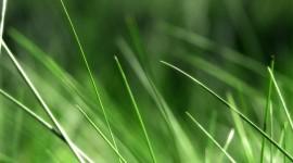 4K Green Grass Wallpaper HQ#1