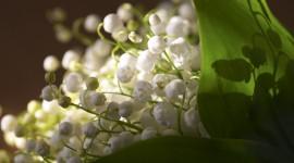 4K Lilies Of The Valley Desktop Wallpaper