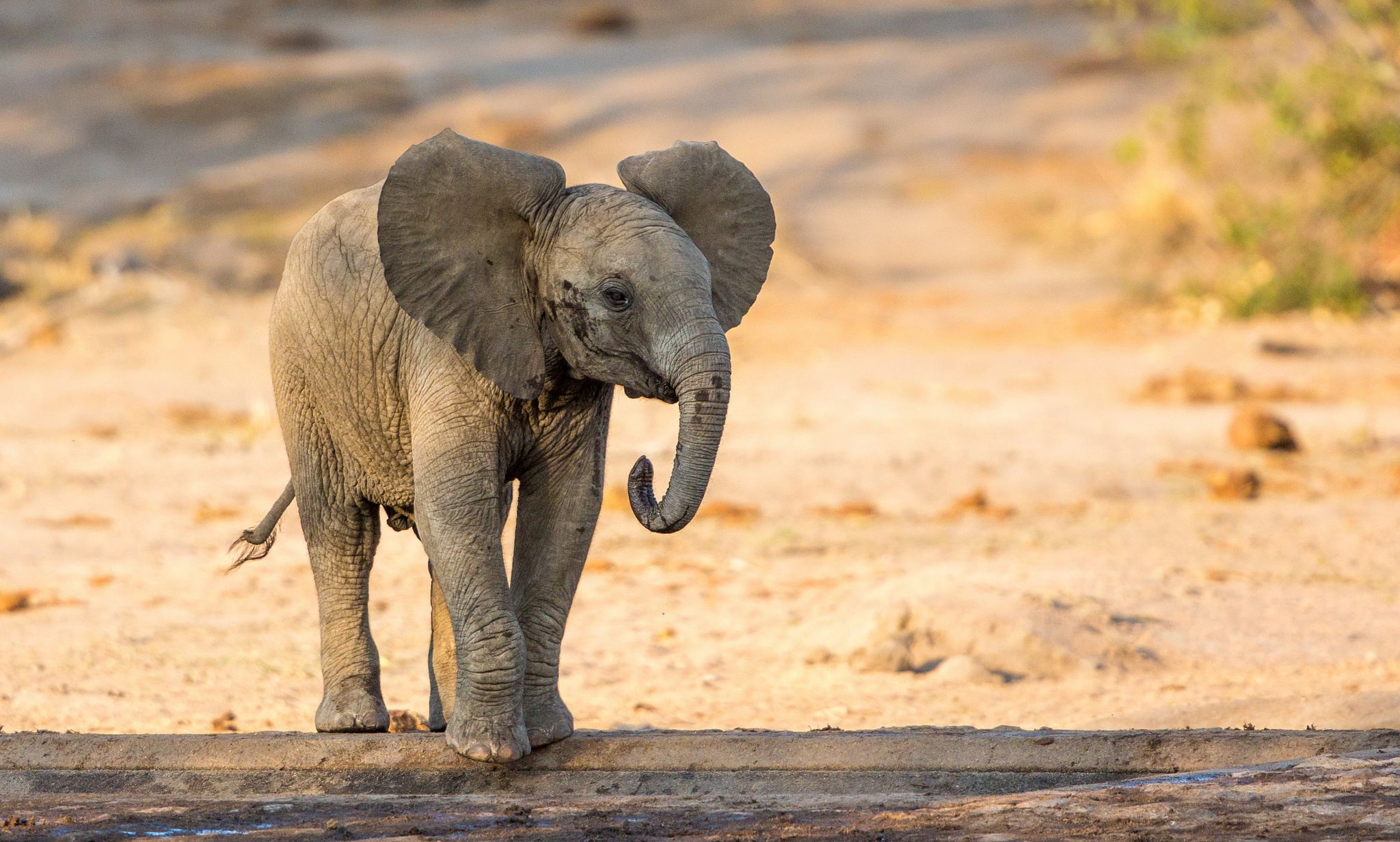 4K Little Elephants Wallpapers High Quality | Download Free